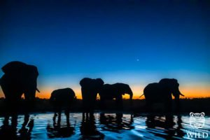 Elephants at Dusk in Etosha