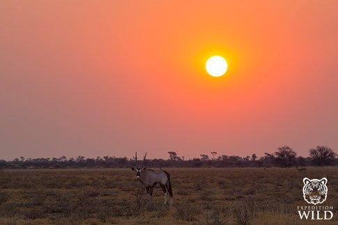 Oryx In Central Kalahari Game Reserve