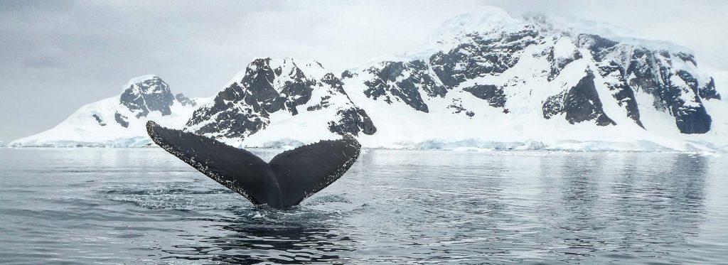 Trips To Antarctica