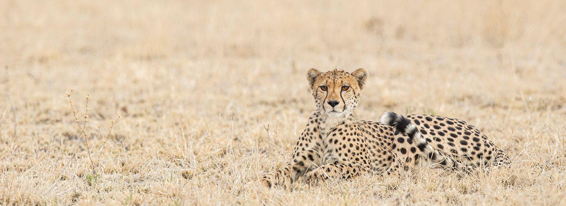 Botswana Safari