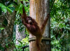 Best of Borneo