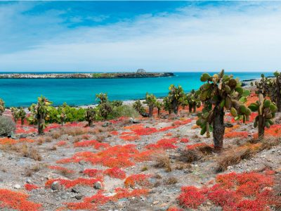Galapagos at a Glance: Southern Islands (Grand Daphne)