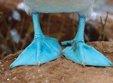 Galapagos Adventure: Northern Islands (Grand Daphne)