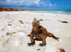Ultimate Galapagos: Central Islands (Le Grande Daphne)