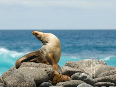 Absolute Galapagos (Grand Daphne)