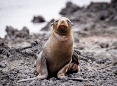 Classic Galapagos: South Eastern Islands (Grand Queen Beatriz)