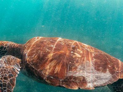 Galapagos Encounter: Central Islands (Grand Queen Beatriz)