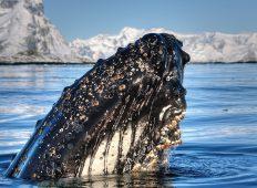 Antarctic Whale Journey