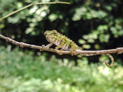 Highlights of Madagascar — Plus