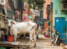 Delhi to Kathmandu