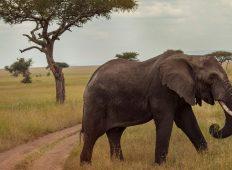 Victoria Falls & Serengeti Overland: Lakes & Landos