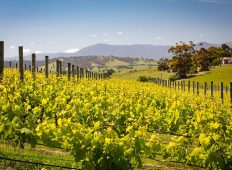Australia Retreat: Yarra Valley