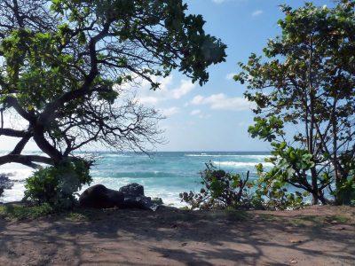 Hawaiian Adventure: Beachin' & Boardin'