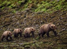 Haida Gwaii Islands Expedition