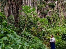 Vanuatu Expedition