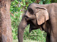 Cambodia Expedition: Elephants & Jungles