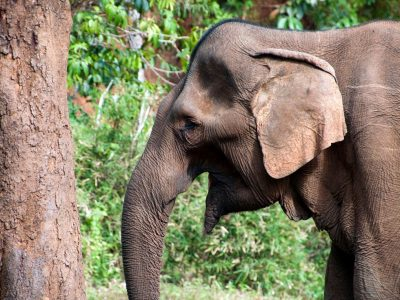 Cambodia Expedition: Elephants & Jungles