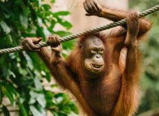 Essential Borneo