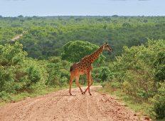 Wild Kruger Camping