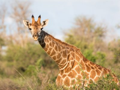 Kruger Lodge Experience (3 days)
