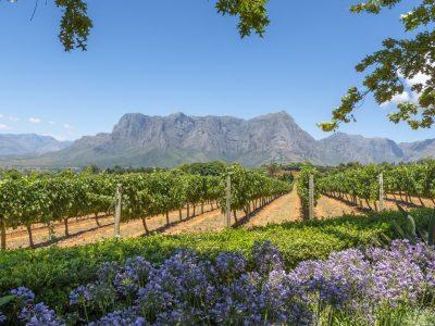 Cape Town & Winelands