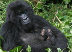 Gorillas & East Africa Safari