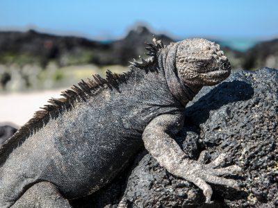 Galápagos — North & Central Islands aboard the Eden