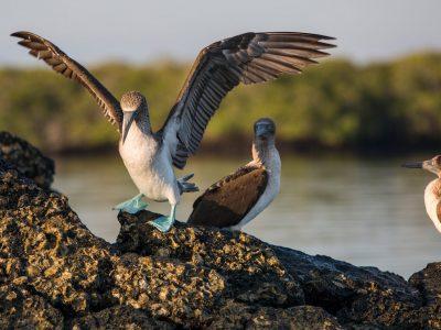 Galápagos — South & East Islands aboard the Eden