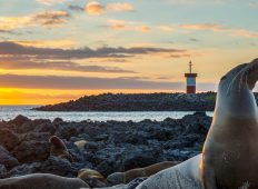Galápagos – Central and East Islands aboard the Reina Silvia Voyager (Cruise Only)