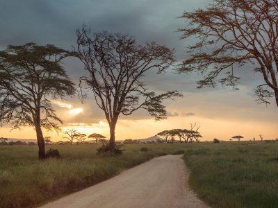 Upgraded Safari in Kenya & Tanzania